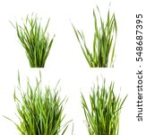 green grass isolated on white... | Shutterstock . vector #548687395