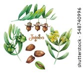 watercolor jojoba collection... | Shutterstock . vector #548740996