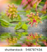 Small photo of Close up Bud Albizia lebbeck with reflect in water
