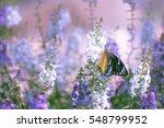 Natural Flower Background ...