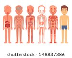 human body anatomy vector...