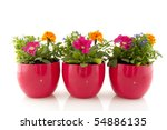 summer flowers for the colorful ... | Shutterstock . vector #54886135
