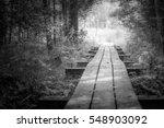swamp  | Shutterstock . vector #548903092