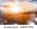 sunny day on the meadow | Shutterstock . vector #548907556