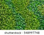 Flower Plant Wall