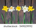 Daffodil On Dark Wooden...
