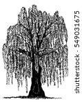 Vector   Weeping Willow Tree...