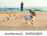 Stock photo blurred sea views blurred young woman walking a dog breed jack russell on the seashore pet basic 549042805