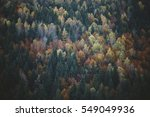 Autumn Colors Of Trees