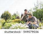 gardeners working at plant... | Shutterstock . vector #549079036