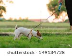 Stock photo woman walking with dog 549134728