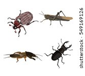 Insects On A White Background....