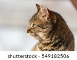 Profile Of Domestic Cat