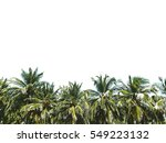 coconut palm trees  beautiful... | Shutterstock . vector #549223132