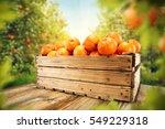 fresh orange fruits and leaves... | Shutterstock . vector #549229318
