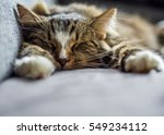 Stock photo sunday sleep 549234112
