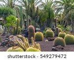 daylight summer scene shot on... | Shutterstock . vector #549279472