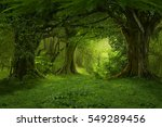 deep tropical jungles of... | Shutterstock . vector #549289456