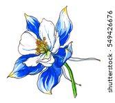 blue columbine aquilegia... | Shutterstock . vector #549426676