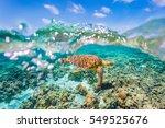 A Green Sea Turtle Swimming...