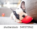 Stock photo puppy 549575962