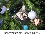 cat on christmas tree. naughty... | Shutterstock . vector #549618742