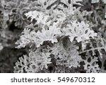 silver dust | Shutterstock . vector #549670312