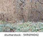 green shrub and twigs on a... | Shutterstock . vector #549694042