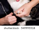 Stock photo a groomer cuts the dog s claw 549995518
