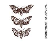Moths. Sphingidae. Set ...