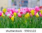 tulips | Shutterstock . vector #5501122