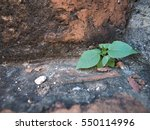 Small photo of Little tree growing up on the stone wall. never give up, Alive, Survive , Stay alive , keep alive