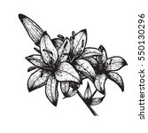 hand drawn tiger lily  vector... | Shutterstock .eps vector #550130296