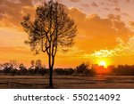 the tree silhouette   lonely... | Shutterstock . vector #550214092