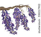 purple wisteria vector...   Shutterstock .eps vector #550217902