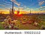 Saguaros At Sunset In Sonoran...