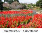 Beautiful Garden Of Nokonoshim...