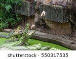 Group Of Crocodiles Is Eating...