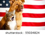Stock photo proud american pets with us flag in as background focus on cat with opened mouth 55034824