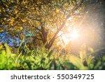 sunlight through the tree in... | Shutterstock . vector #550349725