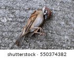 A Dead Bird In Road