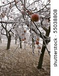 Bio Apples Left On The Trees I...