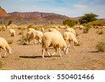 Sheep Grazing On Stony Ground...