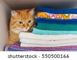 Cute Ginger Cat Hides In A Pil...