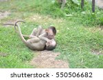Baby Monkeys Play Together