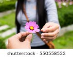 man give flower to girl in... | Shutterstock . vector #550558522