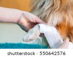 human bandage a shetland...   Shutterstock . vector #550642576