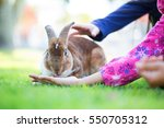 girl is feeding the rabbit | Shutterstock . vector #550705312