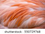 Pink Flamingo Color Isolated