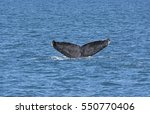 Whale Flukes On The Way Down I...